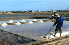 Mưa trái mùa gây hại lớn cho diêm dân Trà Vinh
