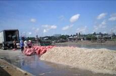 Ngư dân Trà Vinh thắng đậm mùa khai thác ruốc
