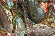 ĐBSCL: Giá cua biển thương phẩm tăng rất mạnh