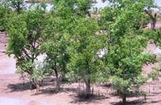 Hơn 200 tỷ đồng trồng rừng phòng hộ ở Kiên Giang