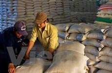 VFA: Xuất khẩu gạo tăng tốc mạnh trong tháng 8
