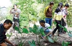 Bảo tồn nguồn thảo dược quý trên vùng Bảy Núi