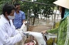 Tỉnh Thái Bình công bố dịch cúm gia cầm ở hai xã