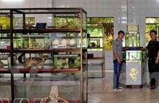 """Bảo tàng rắn """"độc nhất vô nhị"""" tại tỉnh Tiền Giang"""