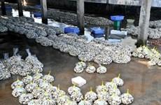Đặc sản ngao sạch Giao Thủy đang được ưa chuộng