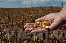 Giá các mặt hàng nông sản đang biến động bất nhất