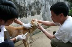 FAO sẽ hỗ trợ Yên Bái trong phòng chống bệnh dại
