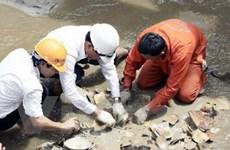 Thu hơn 4.000 hiện vật nguyên vẹn từ tàu cổ bị đắm