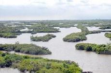 Tăng quản lý diện tích rừng ngập mặn ven biển