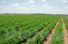 """Nông nghiệp giúp châu Á thoát """"bão"""" tài chính"""