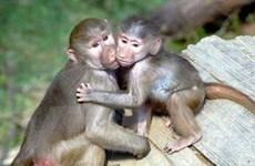 Bắt giữ ôtô chở 96 con khỉ không rõ nguồn gốc