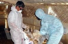 Hướng tới chủ động kiểm soát virus cúm gia cầm