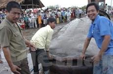 Đua nhau xem cá voi chết vì mắc lưới ở Bạc Liêu