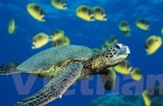 Không bán rùa biển và các sản phẩm từ rùa biển