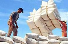 Việt Nam sẽ đạt mức xuất khẩu gạo kỷ lục