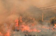 Hàng chục nghìn người sơ tán vì cháy rừng ở Hy Lạp
