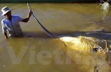 Campuchia phát triển sản xuất con giống hải sản