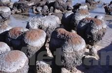 Phát hiện sinh vật cổ xưa nhất Trái đất ở Argentina