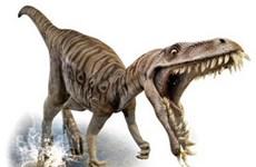 Tảo độc - thủ phạm làm khủng long tuyệt chủng