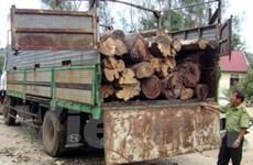 Liên tiếp bắt các vụ vận chuyển gỗ lậu tại Đắk Lắk