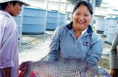 Cứu giống cá hô thoát nguy cơ tuyệt chủng