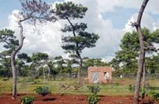 Dân số tăng cơ học kéo theo nạn phá rừng