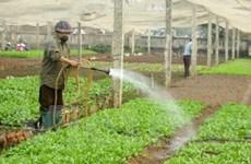 Sản xuất rau an toàn theo quy trình Nhật Bản