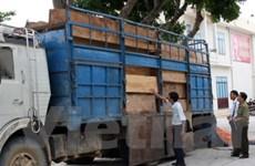 Bắt nhiều vụ vận chuyển gỗ lậu ở Quảng Ngãi