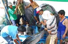Mỹ: Thị trường cá ngừ lớn nhất của Việt Nam