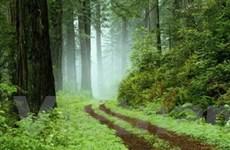 Đẩy nhanh việc chi trả dịch vụ môi trường rừng
