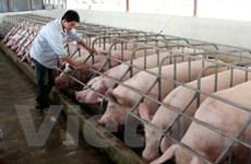 Hà Nội xây 52 khu chăn nuôi tập trung ở ngoại ô