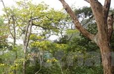 Yên Tử trở thành rừng quốc gia ở tỉnh Quảng Ninh