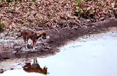 Vùng Gò Công ở Tiền Giang sắp bị cạn nước ngọt