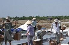 Mua 30.000 tấn muối tạm trữ cho diêm dân TP.HCM