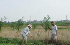 Bình Phước thu hàng trăm ha đất dùng sai mục đích