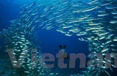 Sinh vật hoang dã lạ đe dọa vùng biển ở châu Âu