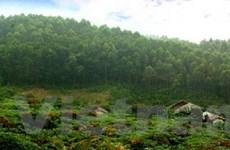 Việt Nam hưởng ứng Năm quốc tế về rừng 2011