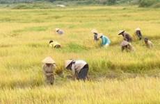 Các giải pháp tăng 1 triệu tấn lúa trong năm 2011