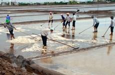 Giá muối tại tỉnh Trà Vinh đã tăng lên gần gấp đôi