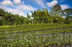 66 tỷ đồng đầu tư sản xuất giống càphê, ca cao