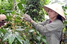 Đắk Lắk nâng lượng càphê chế biến sâu lên 15%