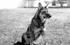 Mộ 1 chú chó bị đào bới để lấy vòng cổ kim cương