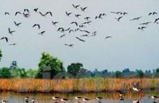 Vườn quốc gia Tràm Chim là khu Ramsar thứ tư