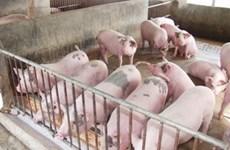 """Người chăn nuôi Nam Bộ có xu hướng """"treo chuồng"""""""