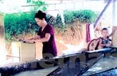 Phát triển nghề giấy bản truyền thống của người Dao