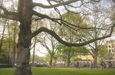 """Hà Lan: Ghi lại """"tiểu sử"""" của những cái cây đã chết"""