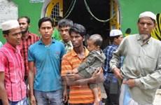 Indonesia cử đặc phái viên về vấn đề người Rohingya