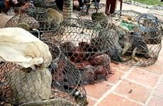 Báo chí giúp đẩy lùi nạn buôn động vật hoang dã