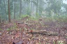 Hà Tĩnh nỗ lực bảo vệ Vườn quốc gia Vũ Quang
