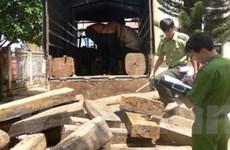 Hà Giang: Bắt giữ xe ôtô chở trái phép gỗ quý hiếm